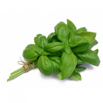 Manjericao melhores ervas para vaporizar