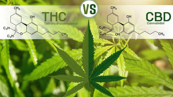 THC vs CDB - Quais são as diferenças?